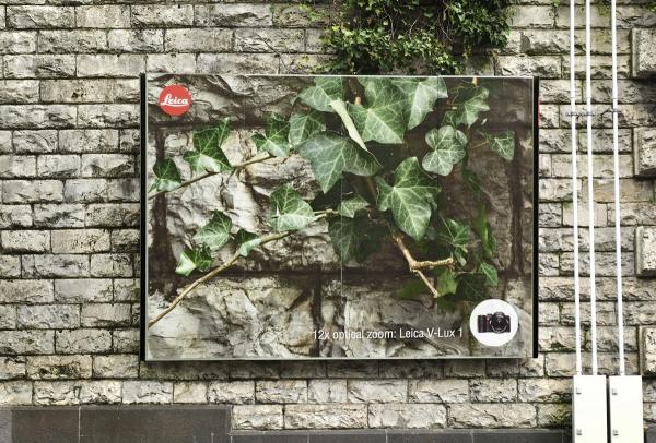 leica-v-lux-1-ivy-small-48892